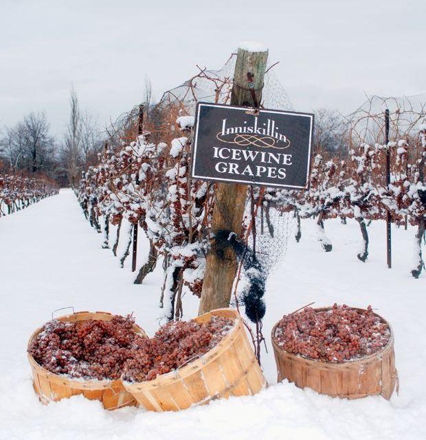 Canadian Ice wine